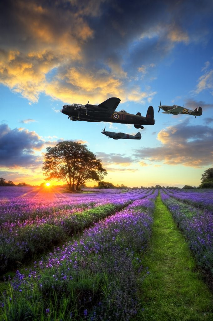 World War 2 era RAF airplanes flying at sunset over vibrant lavender.